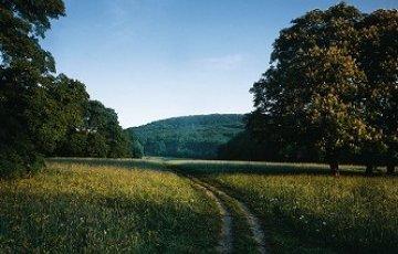 Wienerwald©WienTourismus_  Popp_Hackner_klein